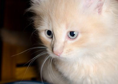 Chatons_Bleue-12
