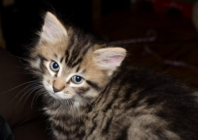 Chatons_Bleue-5